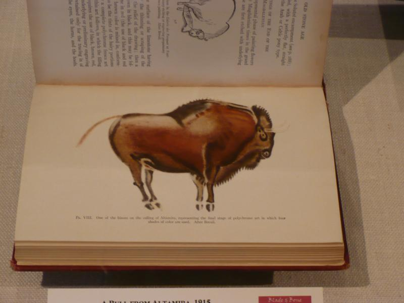 Picture of a bison drawing found at the caves of Altamira.