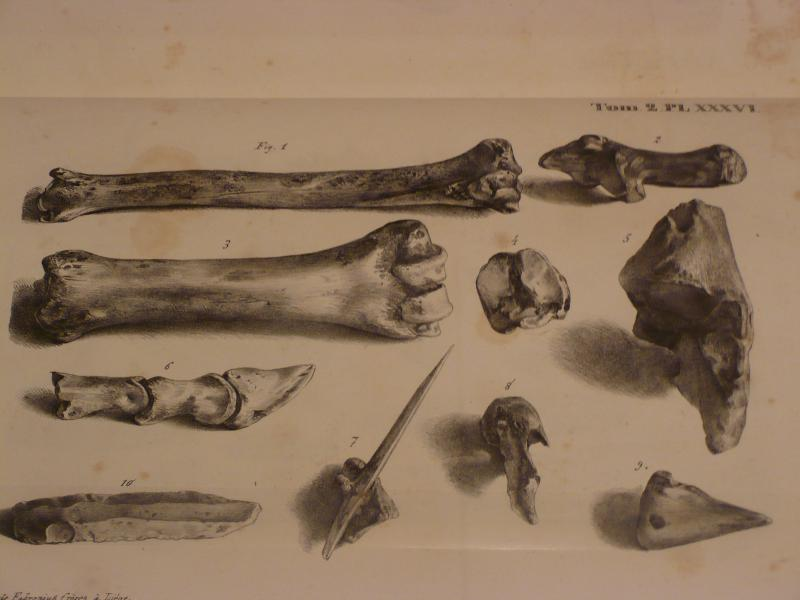 Schmerling's drawings of bones and tools found at Engis Cave