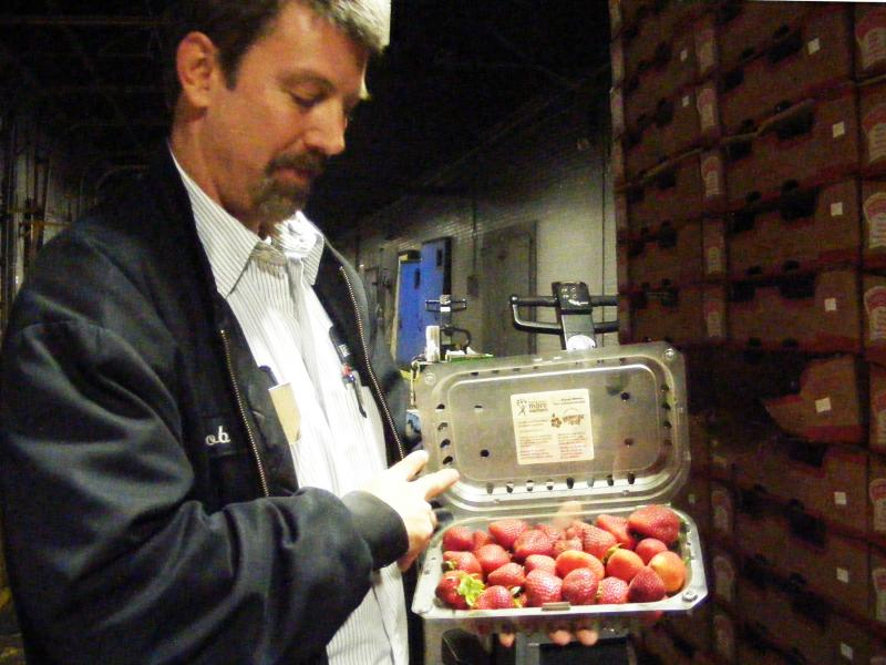 Robbie Mitchell checking out a load of California strawberries at Liberty Fruit Co.