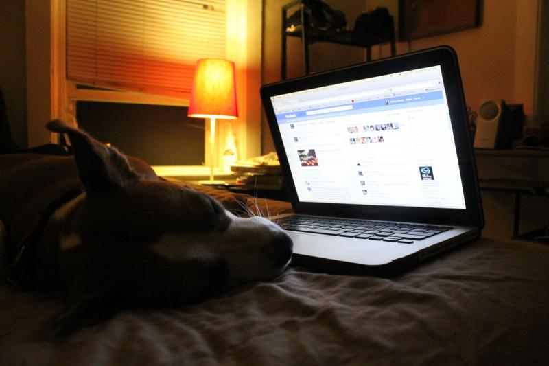 Andrea Silenzi's dog Mabes sleeps soundly while Andrea's up late Tweeting and on Facebook.