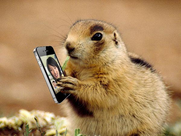 The Silicon Prairie Dog