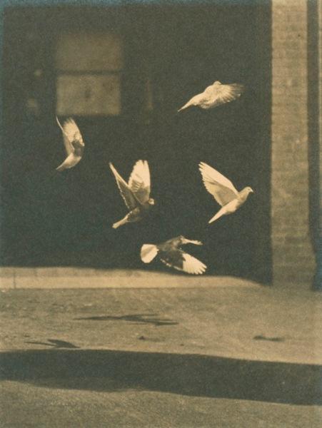 Francis Blake , American, 1850-1913.  Pigeons in Flight, 1889