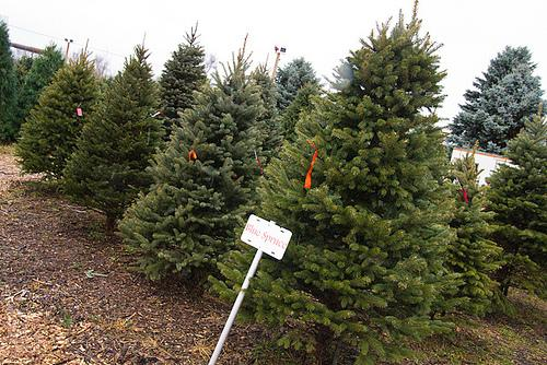 The past year's drought brought Midwest corn exports down, but Kansas' Christmas tree crop was unaffected.