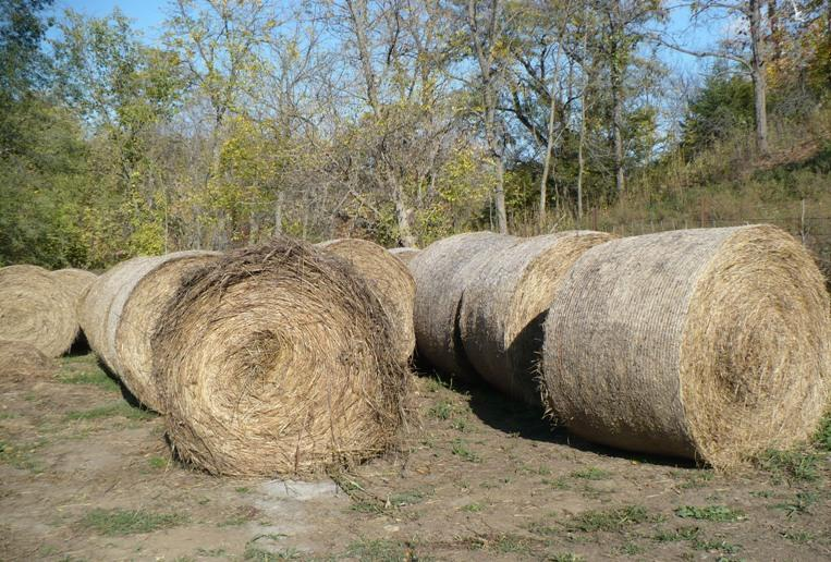 Hay bales on Larry Smithers' 40-acre plot.