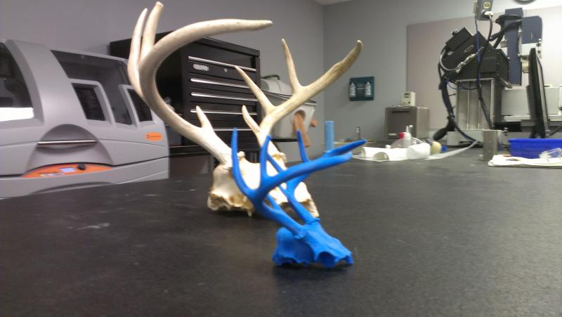 The original antlers and a replica made on the 3D printer