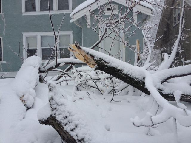 Downed limb in the Troostwood neighborhood of Kansas City, Missouri.