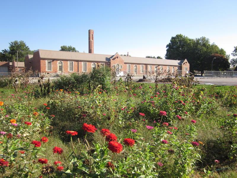 Hale Cook elementary school