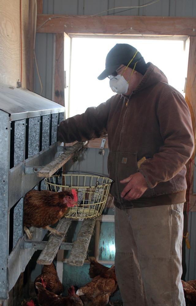 Mark Tjelmeland collects eggs in the hen house where his 700 birds lay them on his farm in McCallsburg, Iowa.
