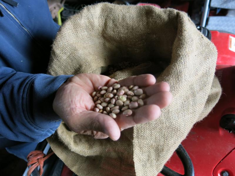 Bolita beans have been grown in the San Luis Valley since Spanish settlers moved into the area in the mid-1800s. Over time their prevalence has fallen off.