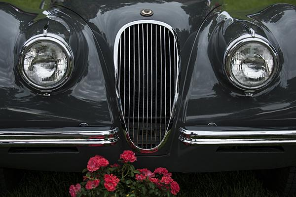 Roses decorate the grass in front of a vintage Jaguar.