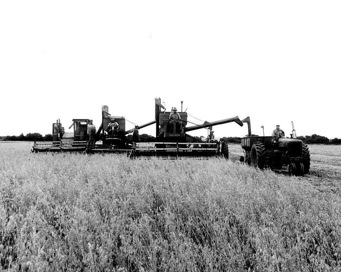 Johnson's grandfather, Raymond Johnson, leads this trio of combines harvesting oats in the 1950s.