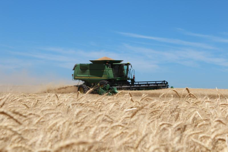 The Kalbs cut wheat on a clear Kansas Day.