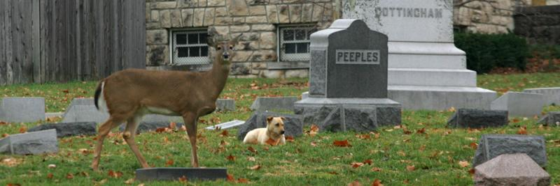 Ella in Elmwood Cemetery with the stray dog who wandered into the cemetery and was later taken in by Wayside Waifs.