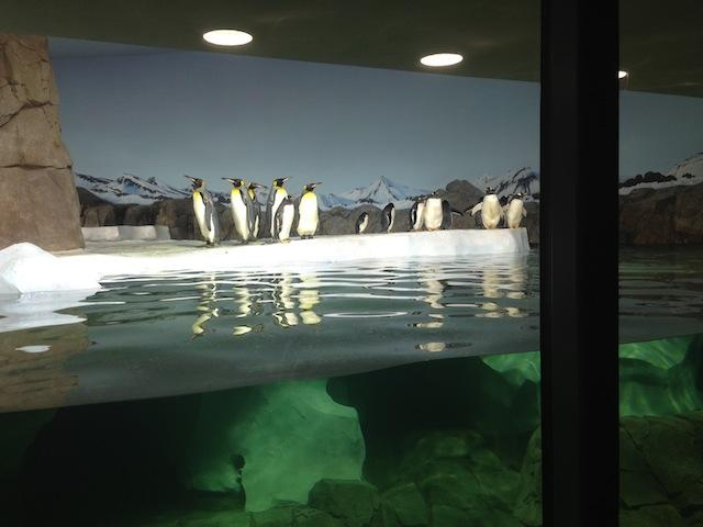 Three species of penguins live in the cold weather section of the exhibit.