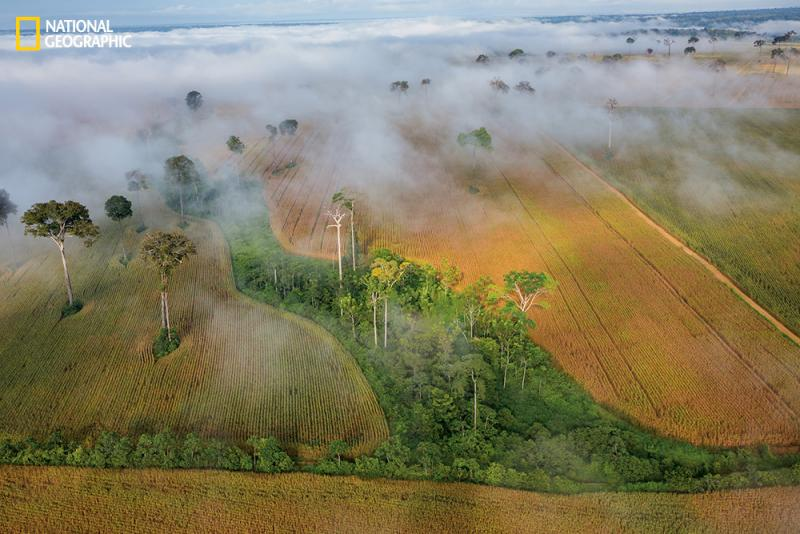 Only the Brazil nut trees — protected by national law — were left standing after farmers cleared this parcel of Amazon rain forest to grow corn.