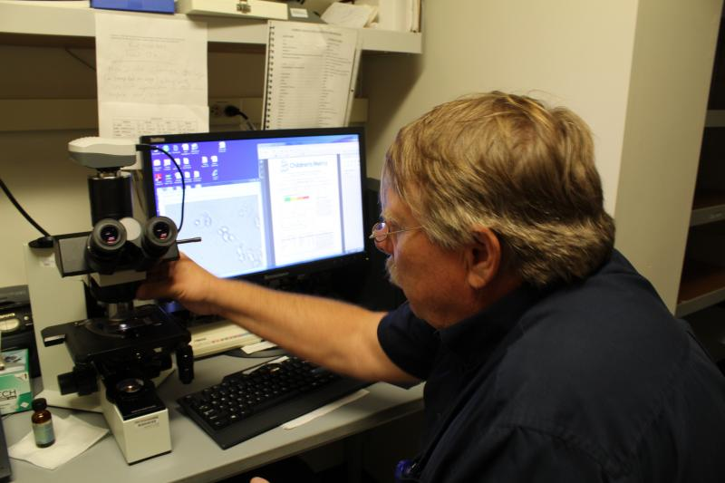 After the collection slide is pulled from the trap, Barnes takes it to the lab to be counted under a microscope.