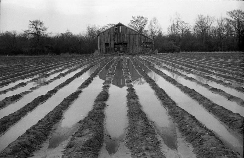Abandoned barn, Mississippi Delta near Lexington, winter, 1963.