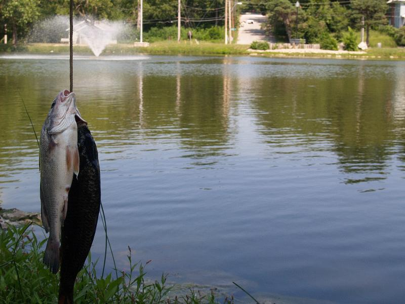 10 urban fishing spots in the kansas city area kcur for Public fishing areas