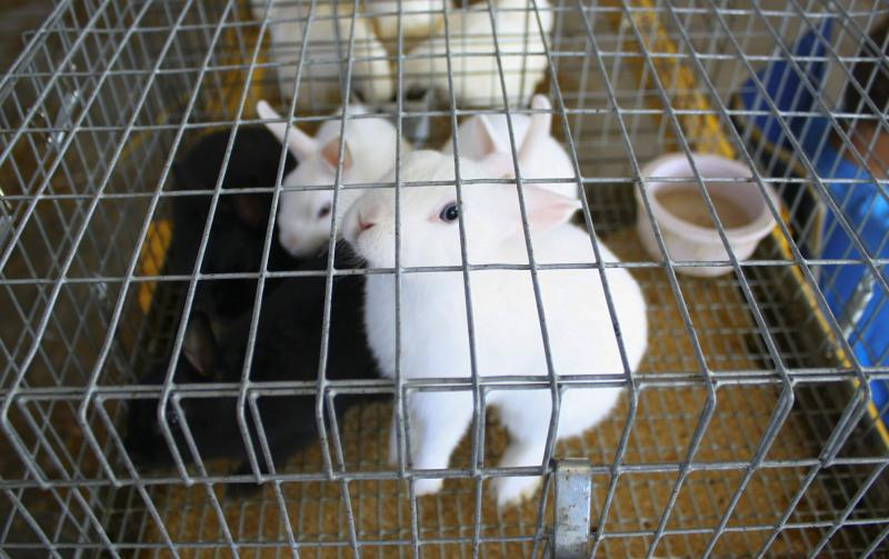 Rabbits wait to be judged at the Wyandotte County Fair.