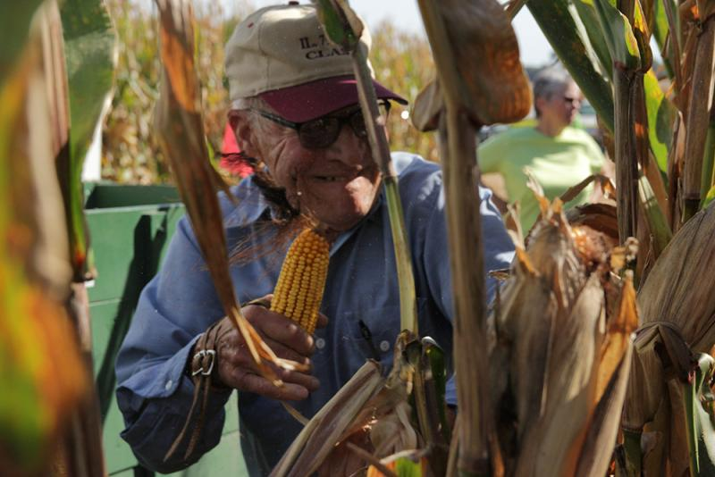 Competitor Harlan Jacobson races to pick rows of corn at the annual Illinois State Corn Husking Competition in September.