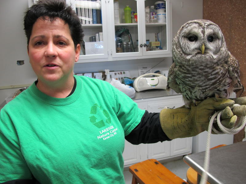 Kimberly Hess, Director at Lakeside Nature Center with Hooty the owl. Hooty is a 19 year old barred owl who came to the center after his nest was destroyed. He was malnourished, and developed cataracts.  He cannot survive in the wild.