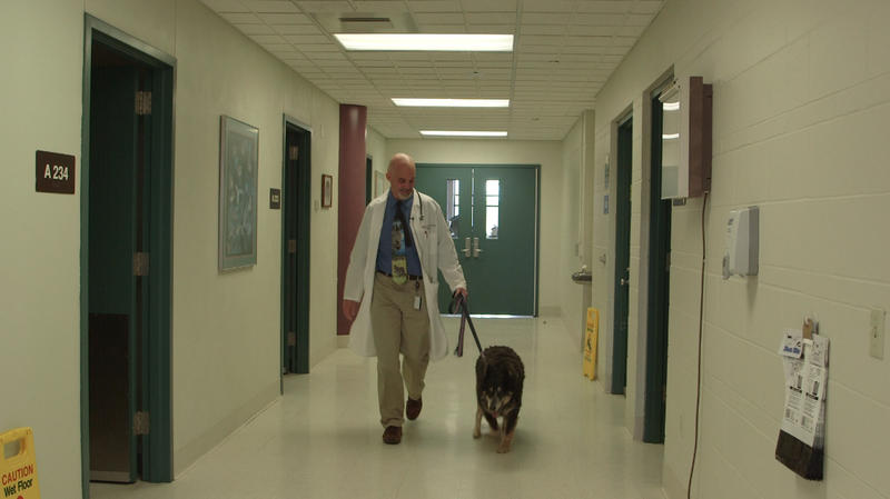 Dr. Jeff Bryan walks with Susie, a 13-year-old dog undergoing treatment at the MU Veterinary School for a possible bladder tumor.