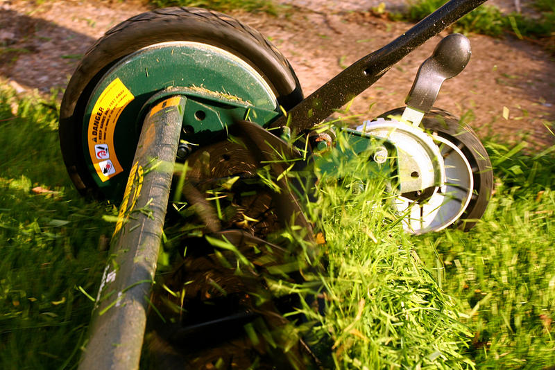 You may not think there's a lot going on with your lawn, but two researchers at MU are proving otherwise.