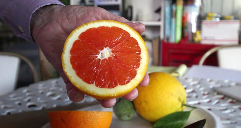 Farmer Russ Finch holds up half of a Cara Cara orange that he grew in his geothermal greenhouse.