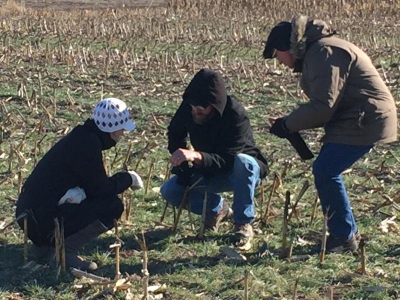 Researchers at the University of Nebraska-Lincoln inspect a field planted with cover crops.