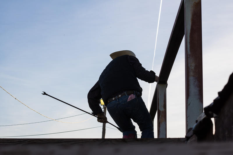 A worker corrals cattle into a chute at Oklahoma National Stockyards in Oklahoma City.