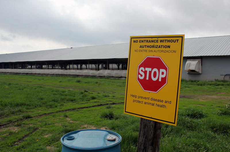 A stop sign at the edge of a Nebraska poultry farm serves as a biosecurity checkpoint.