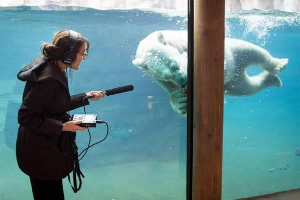 KCUR's Gina Kaufmann with Nikita the polar bear at the Kansas City Zoo. It may seem strange to record the scene here, but it's actually an important part of a radio reporter's process.