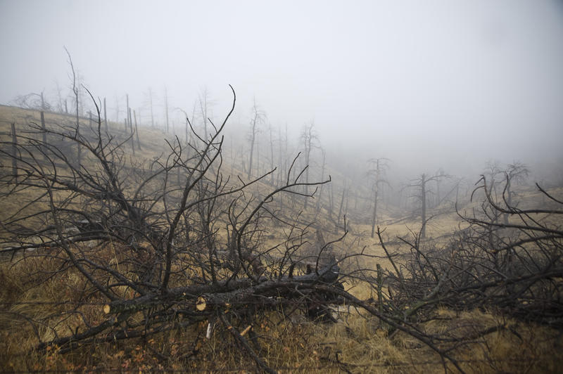 Charred trees scar a hillside on the Pine Ridge in northwest Nebraska after a massive wildfire in 2012.