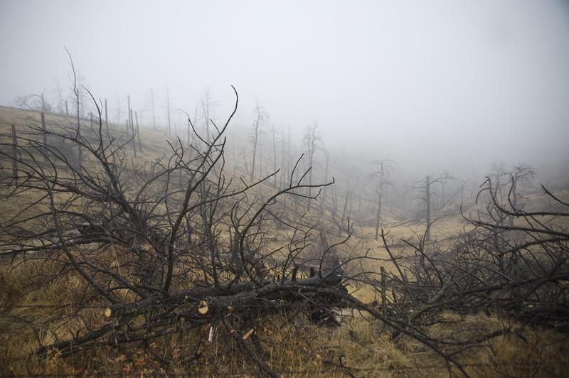 Charred trees scar a hillside on the Pine Ridge in northwest Nebraska after a massive wildfire in 2012.