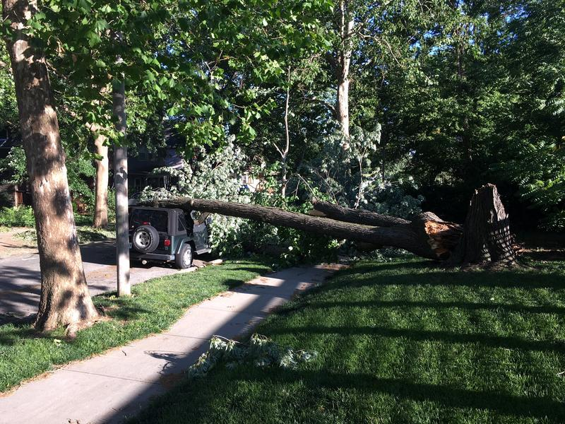 A tree in Kansas City's Southmoreland neighborhood fell on top of a vehicle and downed power lines on Saturday.