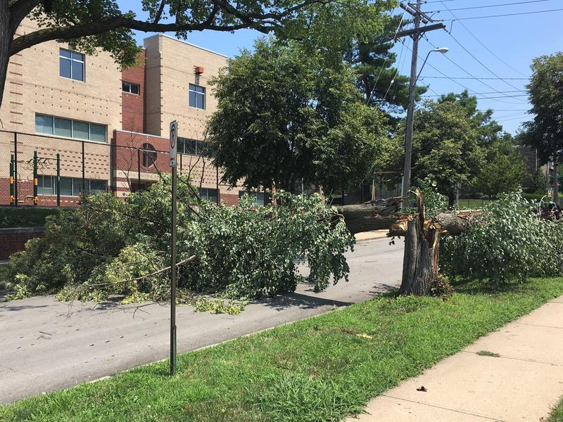 In Kansas City's Southmoreland neighborhood, a tree blocked 41st Street just east of Main on Sunday afternoon.