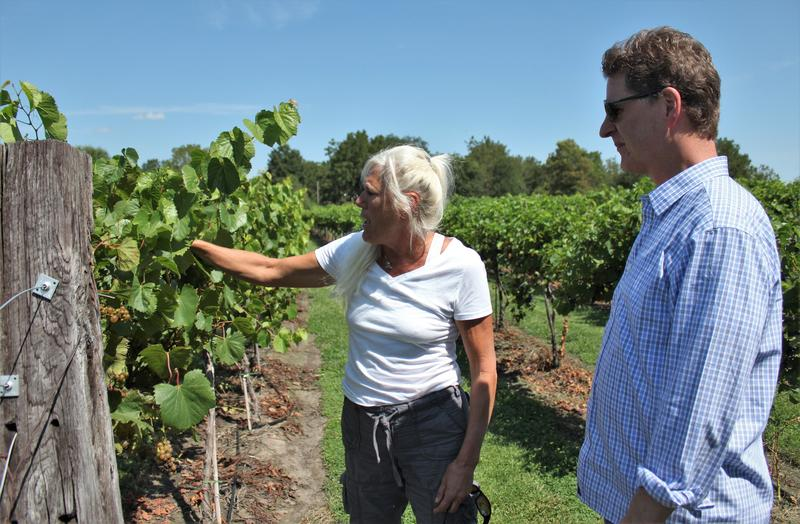 "Holy-Field includes about 17 acres of wine grapes, co-owner Michelle Meyer tells Steve Kraske. ""Most of the vineyards in Missouri and Kansas are growing French hybrids because [of] their cold hardiness and they're conducive to our climate."""