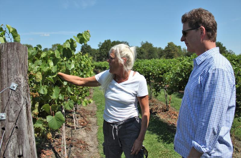 Holy-Field Vineyard & Winery owner Michelle Meyer shows KCUR's Steve Kraske her grapes.