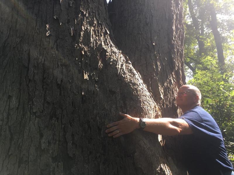 Neil Bass hugs the new state Kansas state champion pecan tree. It has a circumference of 208 inches and is 130 feet tall.