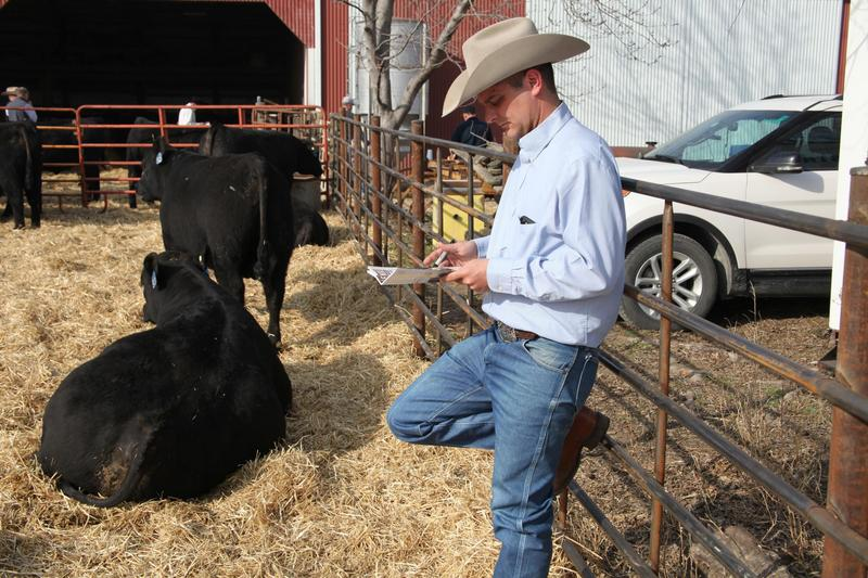 Cattle sales consultant Wes Tiemann reviewed the catalog for an Angus auction in March at Henke Farms at Salisbury, Missouri. Each animal in the auction had been DNA-tested.