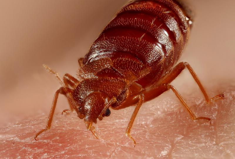 Local exterminators say they've seen more bed bug infestations in Kansas City.