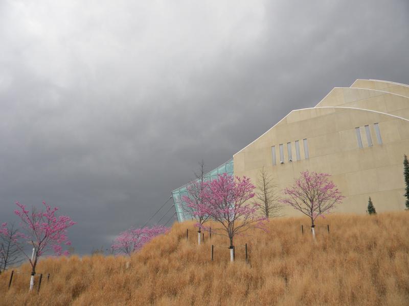 Redbuds spring to life near the Kauffman Center