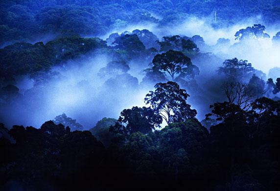 'When I came to Borneo for the first time in 1988 as a 20-year-old this is the Borneo I imagined ... mist-drenched rainforest, incredible trees and rich vegetation ... '