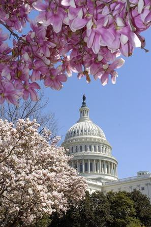 U.S. Capitol grounds in Spring