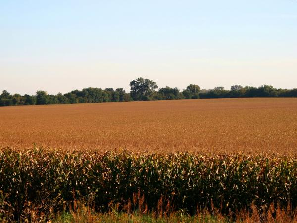 The USDA says about 88 percent of all corn planted in 2012 is genetically engineered.