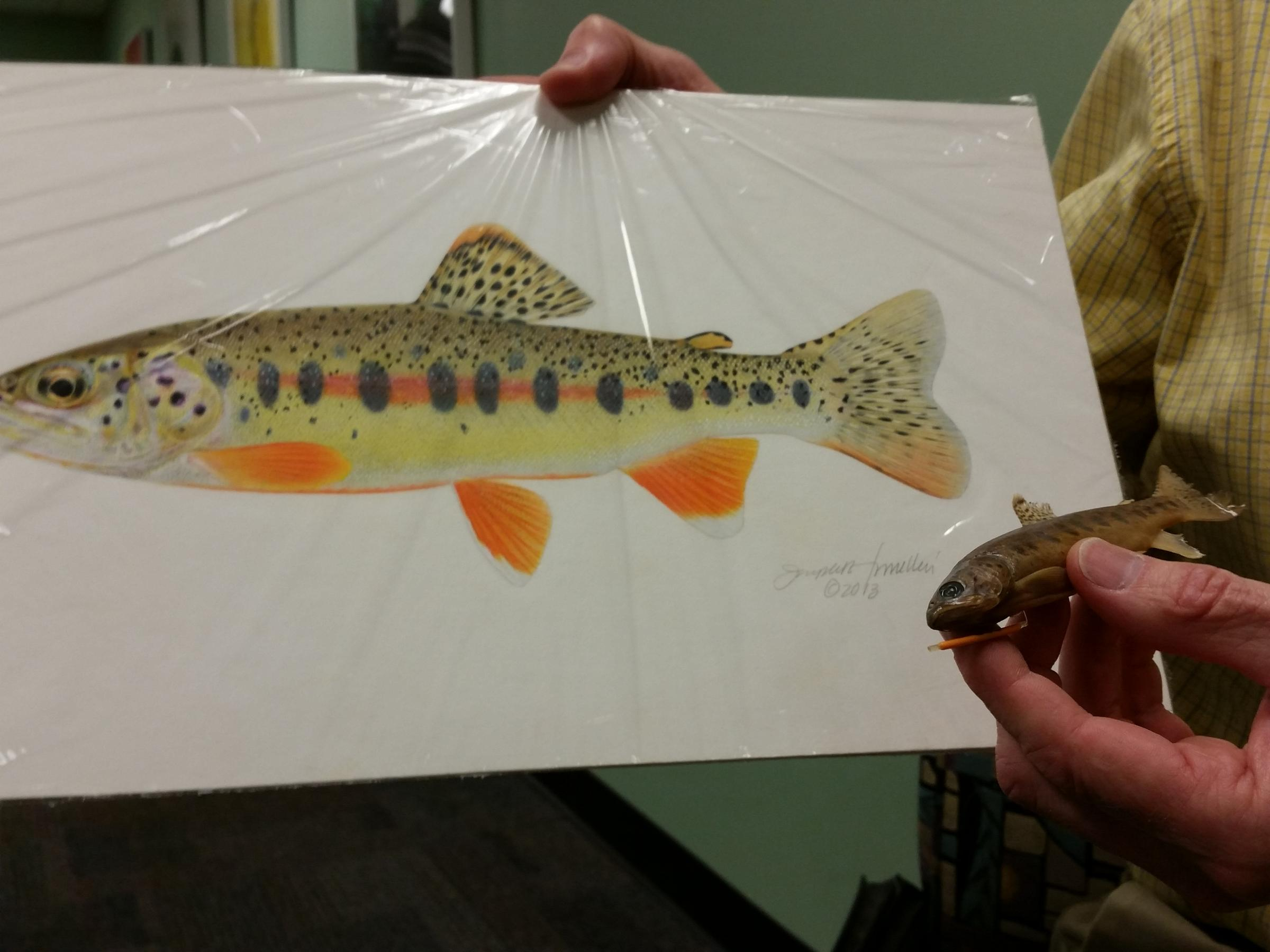 Freshwater fish kansas city - The Art And The Science Go Hand In Hand