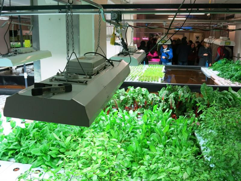 Large banks of fluorescent lamps provide the spectrum of light that keeps the floating beds of plants alive year-round in The Plant Chicago, a vertical farming facility.