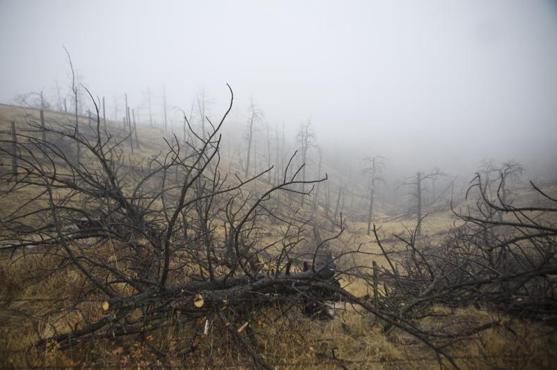 Charred trees scatter a hillside in northwest Nebraska after a massive wildfire in 2012. That year's fire season set a modern record in the state with around 500,000 acres burned.