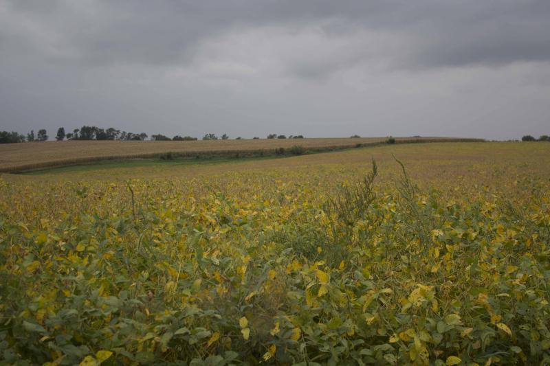 A soybean field in Jasper County, Iowa, in 2016