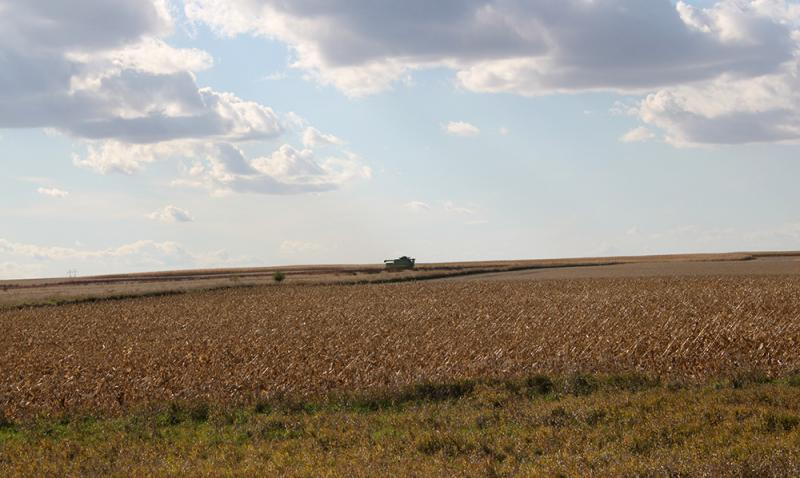 An Iowa soybean harvest